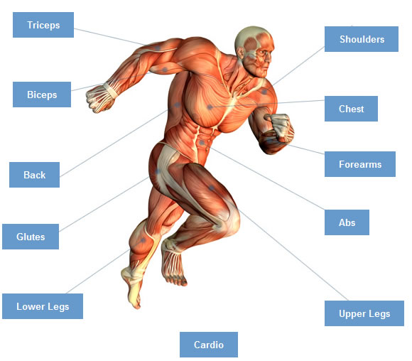 workout for different muscle groups |, Human Body