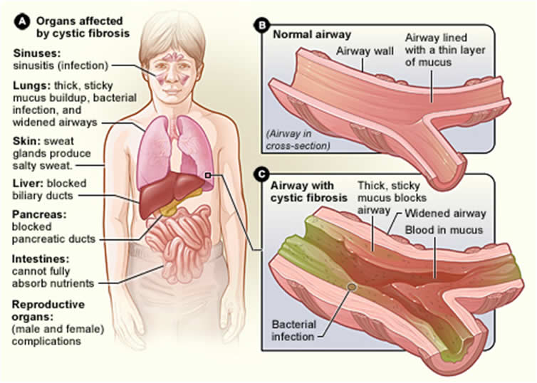 The Respiratory System∗